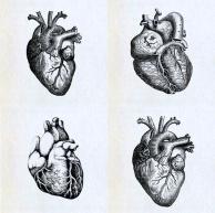heartsss1.jpg